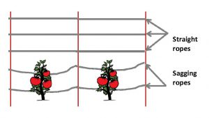 Problem with a rope trellis