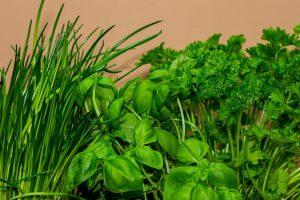 Herbs to grow in backyard garden