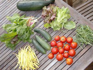 Garden Fresh Vegetables from a Backyard Garden