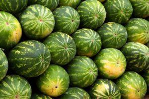 Picking a ripe watermelon