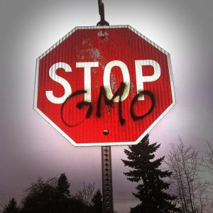 no GMO sweet corn