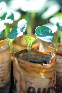 Harden Off Seedlings Outside