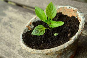 Hardening Seedlings Outside