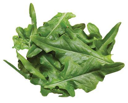Burpee's Oak Leaf Lettuce