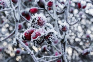 Snow will kill your plants!