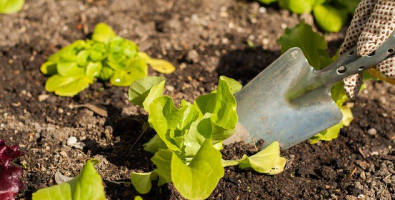 Gardening Tips A Prelude To A Successful Home Gardening Adventure