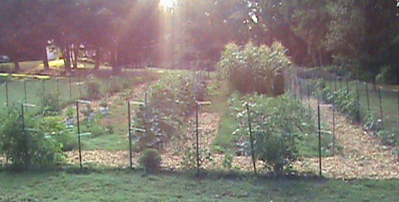 Jim S Garden Adventure A Snapshot In Time Of Jim S Gardening