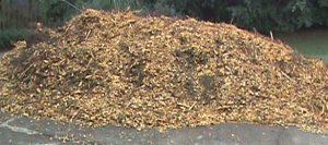 Jim's wood chip pile.