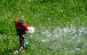 Sprinkler watering the garden.
