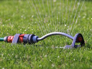 Watering the garden with a sprinkler.