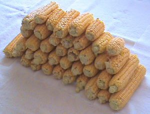 Corn from Jim's garden.