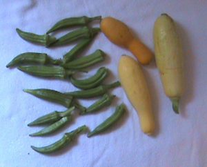 Okra and yellow squash from Jim's garden.