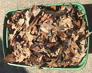 Tote box full of leaves for mulching.