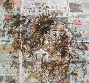 Two layers of newspaper under the mulch.