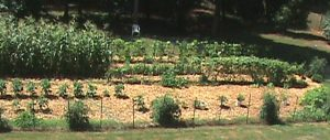 Jim's garden completely mulched.