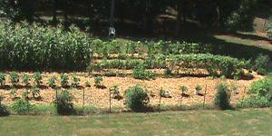 The Perfect Vegetable Garden