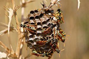 Hornet nest in wooded area.