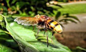 Yellow jacket wasp.