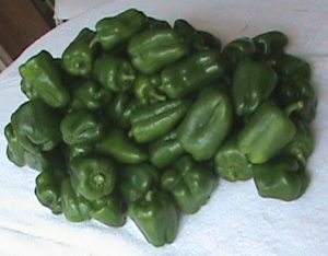 Bell peppers from the garden today.