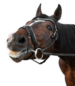 Laughing brown horse.