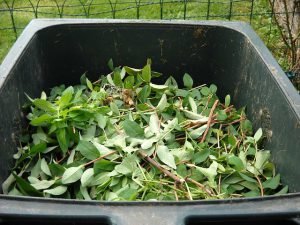 Moist, green ingredients for compost.