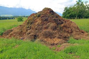 Big compost pile in the field.