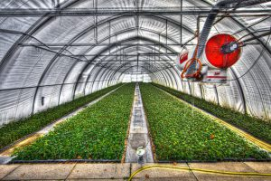 Large commercial greenhouse.