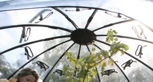 12 un-screened air vents in the sunbubble top.