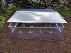 Small portable greenhouse box.