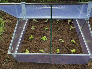 Small portable greenhouse box.