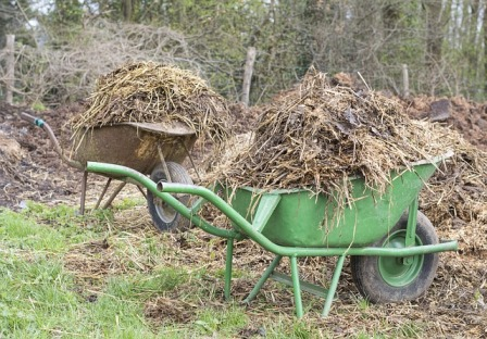 Mulching with a wheelbarrow.