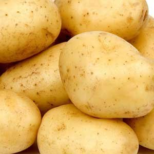 Stargazer Perennials' Yukon Gold seed potatoes