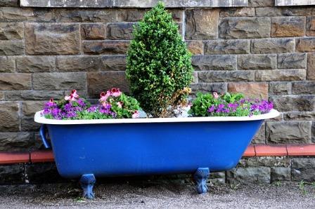 Container garden in an antique bathtub.