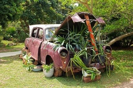 Container garden in a vintage car.