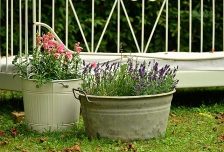 Container garden using metal buckets.