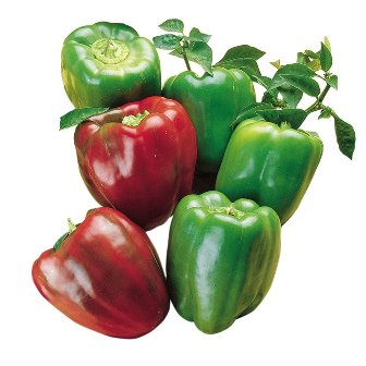 California Wonder sweet peppers