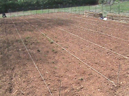 Jim's lined garden rows 4 feet apart.