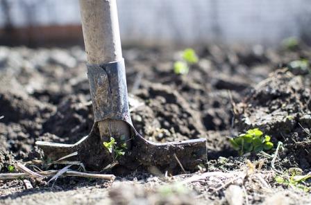 Taking a soil sample.