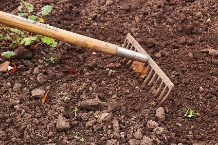 Raking the garden without tilling it.