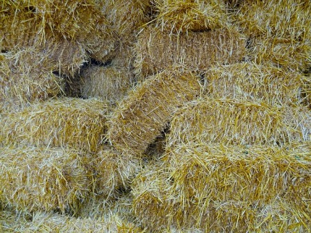 Wheat straw bales at a local feed store.