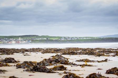 Seaweed on an ocean beach.