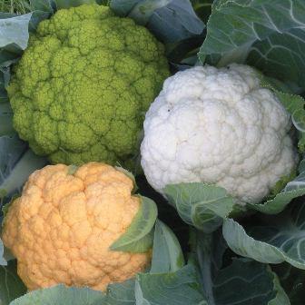 Healthy Blend Cauliflower
