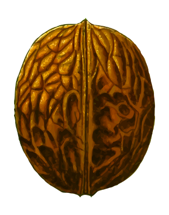 Old man, Walnut, looks like a brain.