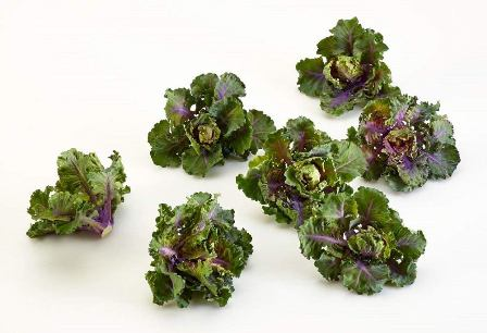 Kalettes - a product of crossbreeding Brussels sprouts and kale.