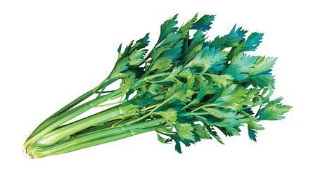 Tango Hybrid Celery
