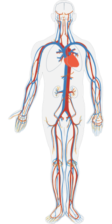 Human Body - pH level