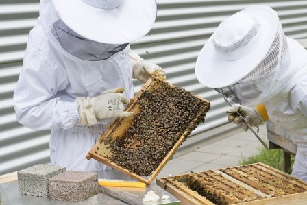 Beekeepers inspecting hive.