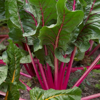 Beet leaves are edible.