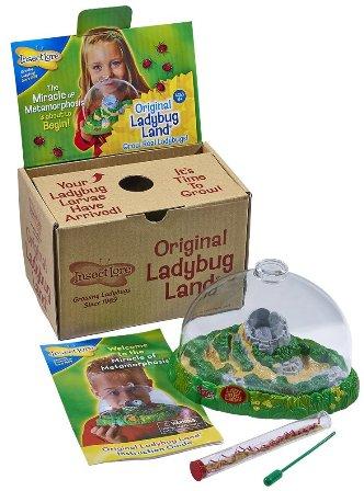 Insect Lore Live Ladybug Growing Kit