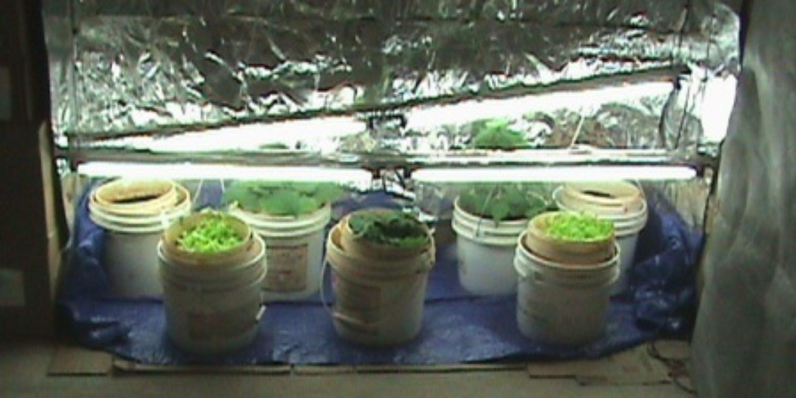 """Chapter 8 """"Growin' Veggies Indoors!"""